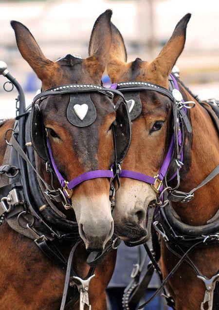 Training Mules